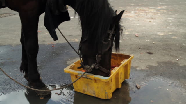 vídeos de stock, filmes e b-roll de a horse eats vegetables from a plastic box. - contéiner de plástico
