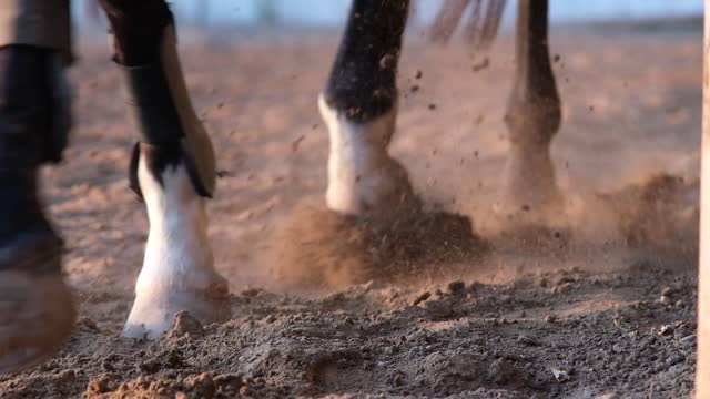 horse ed ingingos hit the ground with a tying - animal leg stock videos & royalty-free footage