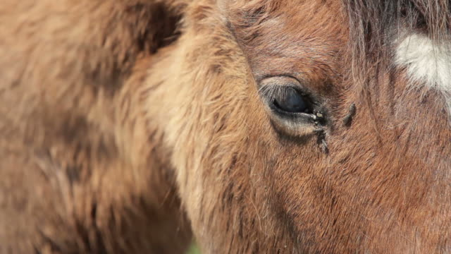 horse eye and flies close-up video - parasitic stock videos & royalty-free footage