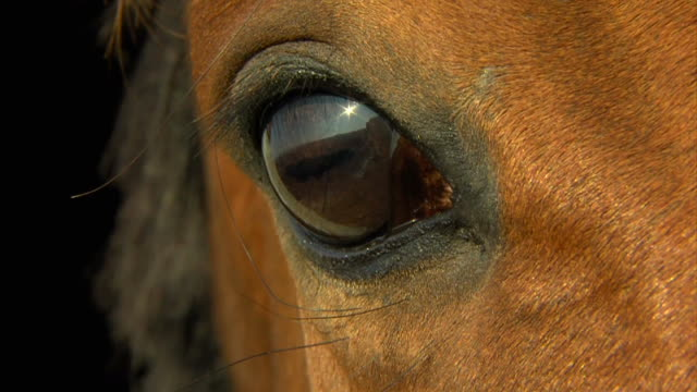horse eye in macro close up - horse stock videos & royalty-free footage