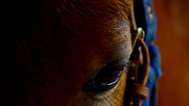 馬の目 - 厩舎点の映像素材/bロール
