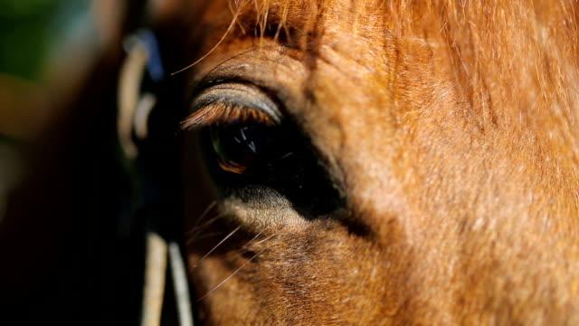 vídeos de stock, filmes e b-roll de cara de cavalo e olhos em close. - montar um animal