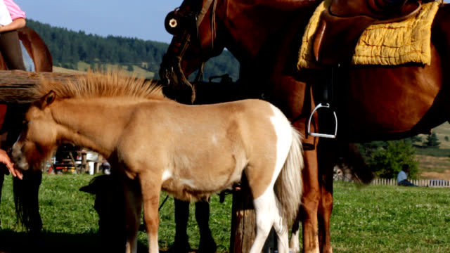 horse family - horse family stock videos & royalty-free footage
