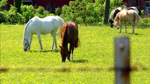 馬の場 - 雄馬点の映像素材/bロール