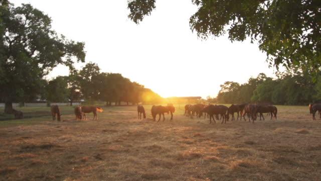 Horse Farm de