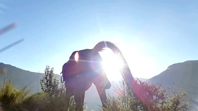 pferd füttern in die sonne hinter den bergen in mojanda lagune - pferd stock-videos und b-roll-filmmaterial