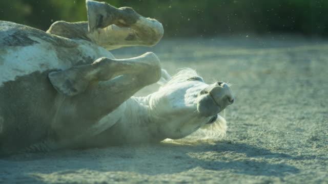 horse france camargue animal outdoors stallion gelding travel - stallion stock videos & royalty-free footage