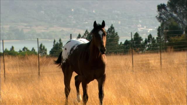 horse galloping around in pasture - galoppera bildbanksvideor och videomaterial från bakom kulisserna