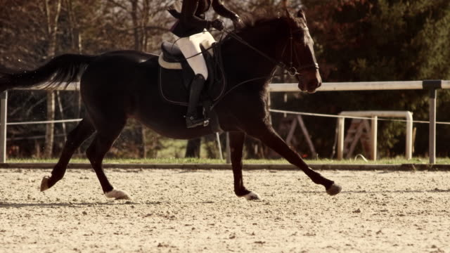 vidéos et rushes de slo mo ts horse galloping in a sunny arena with it's rider - monter à cheval