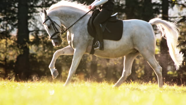 SLO MO TS paard galopperende met ruiter over weide