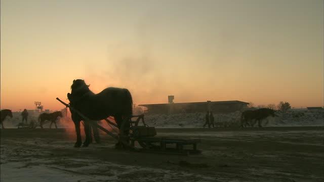 horse grazing / hokkaido - zugpferd stock-videos und b-roll-filmmaterial