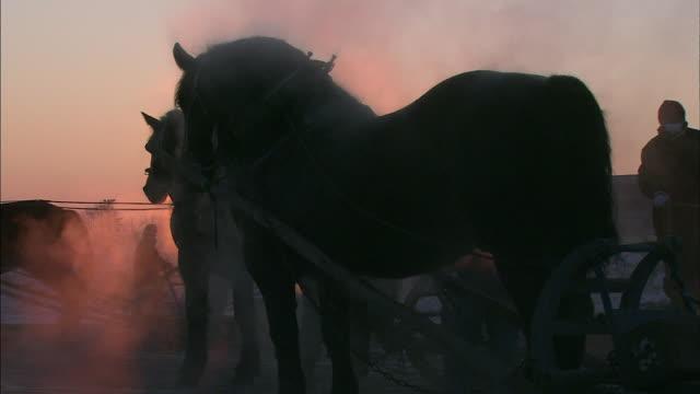horse grazing / hokkaido - draft horse stock videos & royalty-free footage