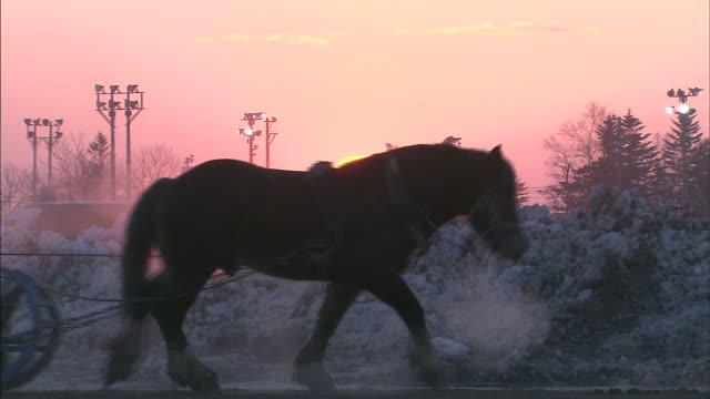 horse grazing / hokkaido - audio disponibile sulla versione digitale video stock e b–roll