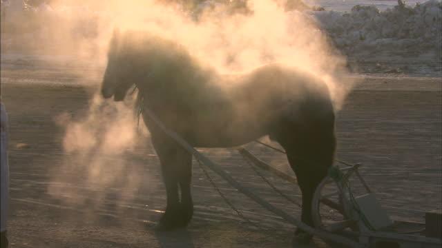 Horse grazing / Hokkaido