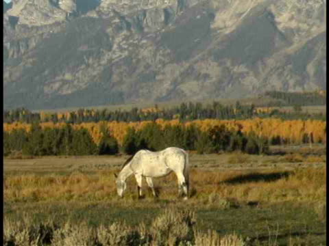 zo, ms, horse grazing in field at teton mountains, grand teton national park, wyoming, usa - parco nazionale del grand teton video stock e b–roll