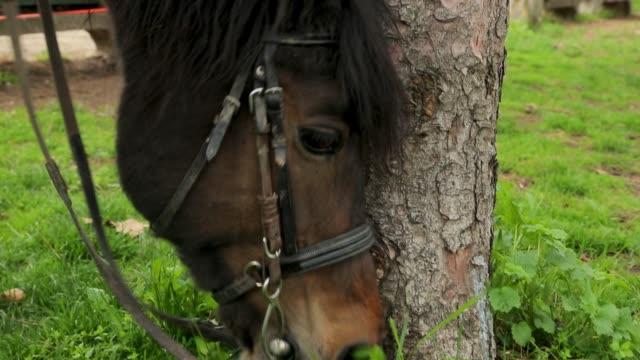 公共の公園での馬の放牧, 草原, 屋外で - 雄馬点の映像素材/bロール