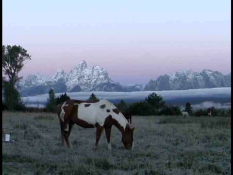 ms, horse grazing in snowy field at teton mountains, grand teton national park, wyoming, usa - parco nazionale del grand teton video stock e b–roll