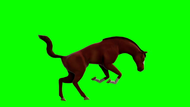 horse green screen (loopable) - collar stock videos and b-roll footage