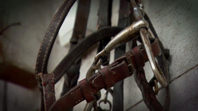 vídeos y material grabado en eventos de stock de horse harness - brida arnés