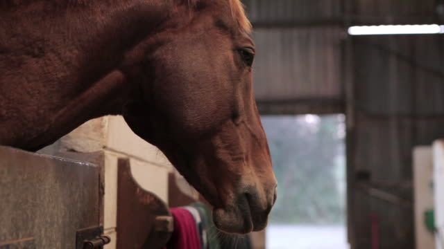 cu horse head sticking out of stable / helland, bodmin, cornwall, united kingdom - grooming stock videos & royalty-free footage