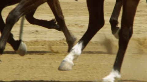 horse hoof up close - real time stock videos & royalty-free footage