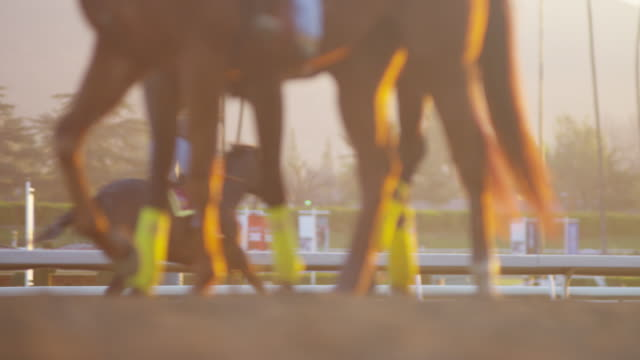 Horse Hooves at Racetrack