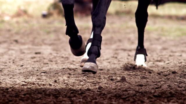 horse hooves galloping - galoppera bildbanksvideor och videomaterial från bakom kulisserna