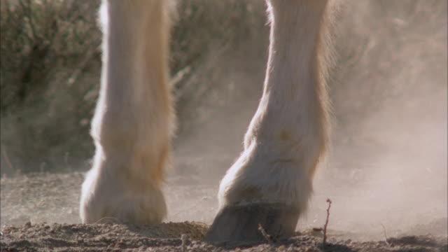 Horse hooves trotting through desert scrub standing in sand turning in circles kicking up dust dirt