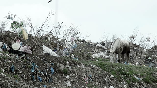 horse in a landfill - littering stock videos & royalty-free footage