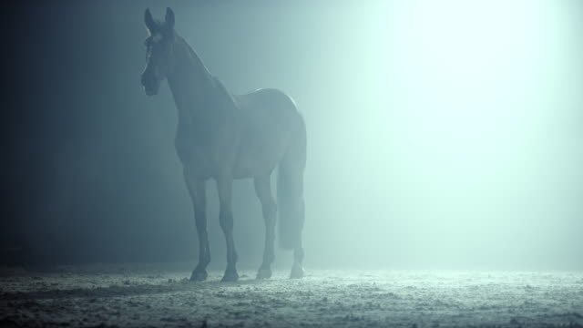 slo mo ds horse in a misty arena at night - horse stock videos & royalty-free footage