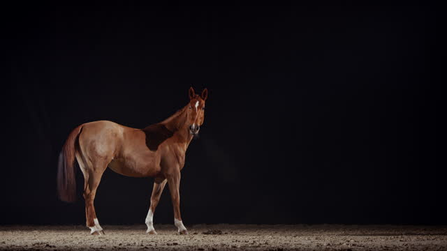 slo mo horse in arena at night observing its surroundings - brown stock videos & royalty-free footage