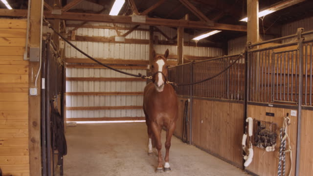 horse in barn waiting to be groomed - ranch home stock videos & royalty-free footage