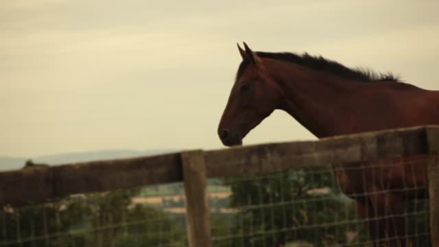 vídeos y material grabado en eventos de stock de horse in evening light - animales de trabajo
