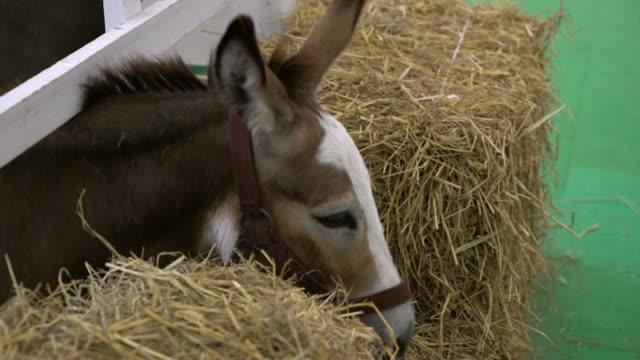 cheval dans la ferme