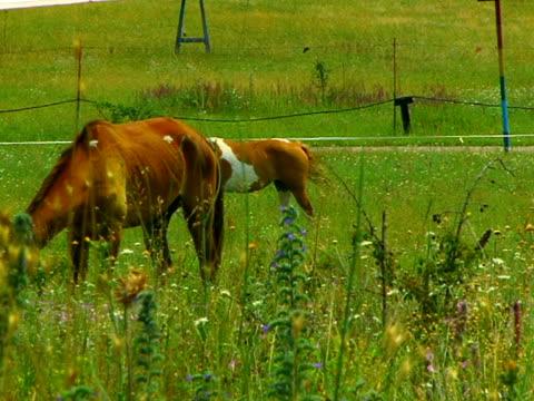 馬の農場 - 働く動物点の映像素材/bロール