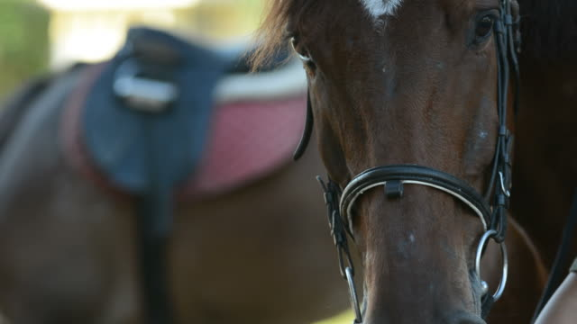 horse in field - horseracing track stock videos and b-roll footage