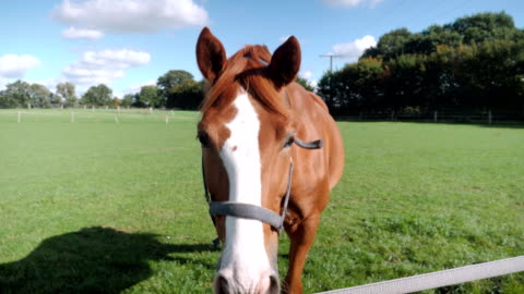 vidéos et rushes de horse in front of camera in slow motion - cheval