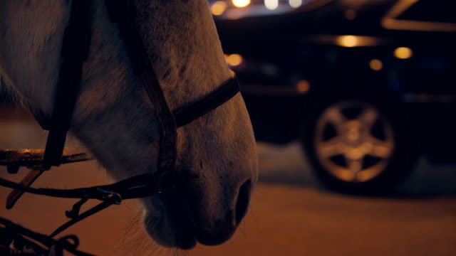 horse in harness standing at evening city street - horse stock videos & royalty-free footage
