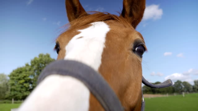 Horse in looking to camera