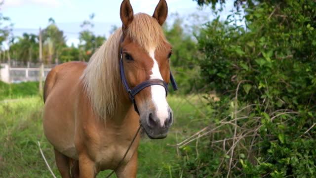 Häst i äng