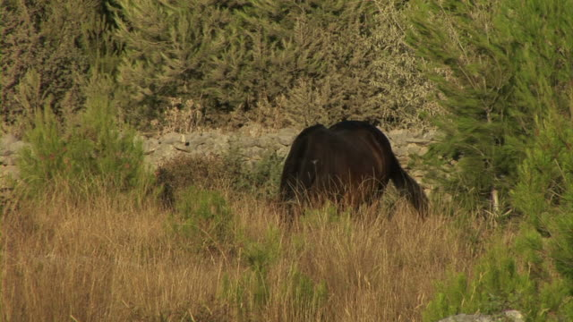 horse in nature - hooved animal stock videos & royalty-free footage