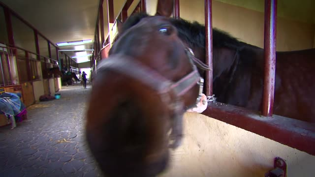 horse in stable - animal markings stock videos & royalty-free footage