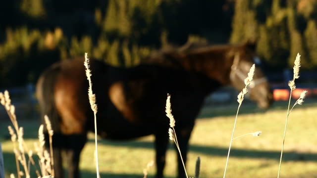 horse in the ranch - hill stock videos & royalty-free footage