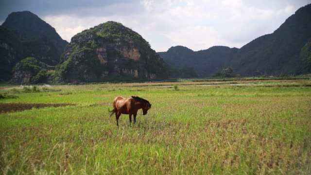 horse in the wild - yunnan province stock videos and b-roll footage
