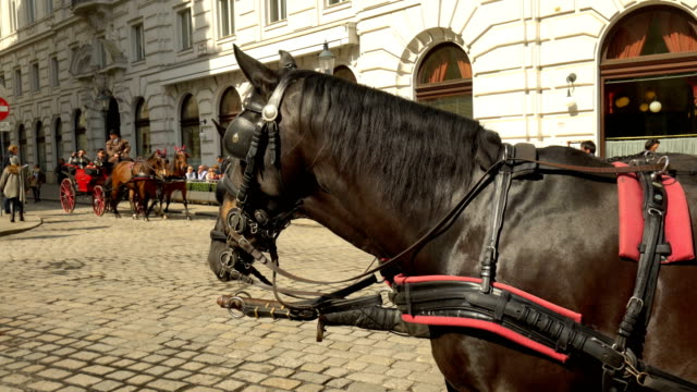 pferd in wien - wien stock-videos und b-roll-filmmaterial