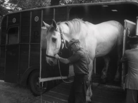 vídeos de stock, filmes e b-roll de a horse is led out of a horse box and into a field - animal de trabalho