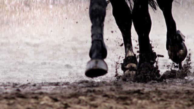 pferd ist ein lauf im regen - huf stock-videos und b-roll-filmmaterial