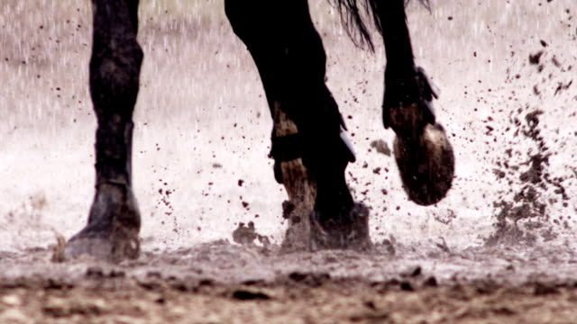 horse is running in the rain - gallop animal gait stock videos & royalty-free footage