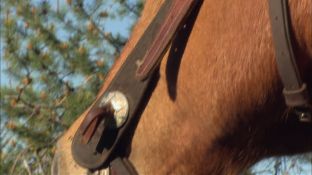 a horse is seen in a halter and bridle. - bridle stock videos & royalty-free footage