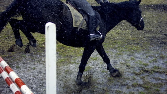 horse jumping in the rain - recreational horse riding stock videos and b-roll footage